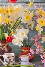 Daffodils, hyacinths, cups