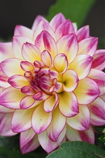 Preview iPhone wallpaper Dahlia flower macro photography, beautiful petals