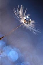 Preview iPhone wallpaper Dandelion, fluff flight, water drop