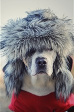 Preview iPhone wallpaper Dog, hat, funny animal