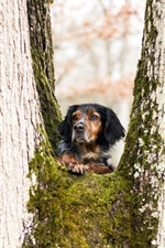 Preview iPhone wallpaper Dog, tree, moss, look