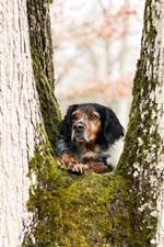 iPhone обои Собака, дерево, мох, взгляд