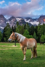 Preview iPhone wallpaper Dolomites, Alps, horse, grass