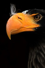 Preview iPhone wallpaper Eagle, beak, black background