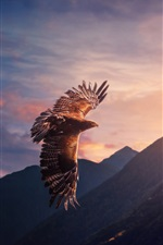 Preview iPhone wallpaper Eagle flight, sunshine, mountains