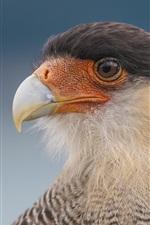 Eagle olha para o lado, cabeça, bico, olhos