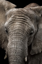 Preview iPhone wallpaper Elephant, black background