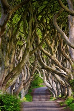 Preview iPhone wallpaper England, Northern Ireland, Dark Hedges, beech, alley, trees