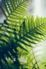 Preview iPhone wallpaper Fern, green leaves, backlight