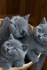 Preview iPhone wallpaper Five gray kittens in a basket