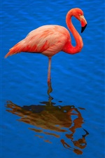 Preview iPhone wallpaper Flamingo, blue water, reflection