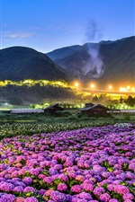 Preview iPhone wallpaper Flowers fields, night, houses, lights