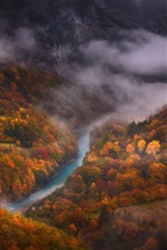 Preview iPhone wallpaper Forest, autumn, river, top view, fog