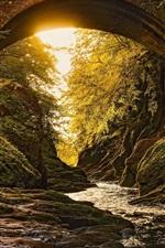 Preview iPhone wallpaper Forest, bridge, river, sunshine, moss