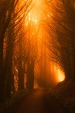 Forest, road, light, fog, morning