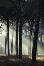 Preview iPhone wallpaper Forest, sun rays, grass, trees