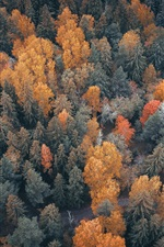 Forest top view, trees, road, autumn