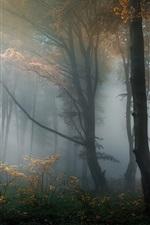 Forest, trees, haze, fog, morning