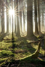 Preview iPhone wallpaper Forest, trees, sun rays, morning