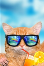 Preview iPhone wallpaper Funny animals, cat and dog, sunglasses, drinks