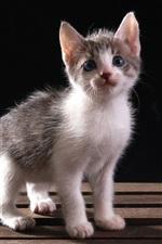 Preview iPhone wallpaper Furry kitten, bench
