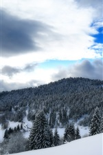 Preview iPhone wallpaper Germany, Baden-Wurttemberg, winter, snow, forest