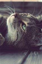 iPhone fondos de pantalla Gray gatito resto, mentir, ojos verdes