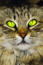 Green eyes cat, furry