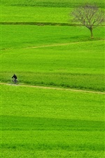 Preview iPhone wallpaper Green fields, farmland