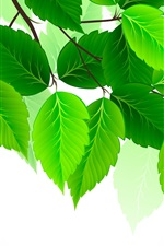 Green leaves, white background, art picture