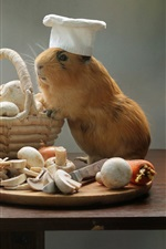 Preview iPhone wallpaper Guinea pigs, cooks, mushrooms, pan, funny animals