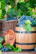Preview iPhone wallpaper Harvest, grapes, fruit, barrel, basket