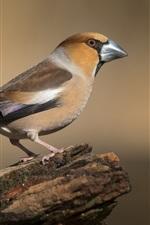 Preview iPhone wallpaper Hawfinch, bird, stump