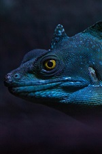 Preview iPhone wallpaper Iguana, amphibian
