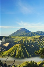 Preview iPhone wallpaper Indonesia, Mount Bromo, volcanoes, valley, trees, fog