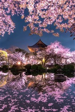 Preview iPhone wallpaper Japan, sakura, trees, pink flowers, night, pond, temple, garden