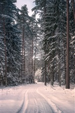 Preview iPhone wallpaper Knyszyn Forest Landscape Park, Poland, trees, snow, winter
