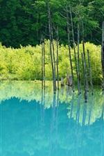 Lake, trees, water reflection
