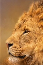 Preview iPhone wallpaper Lion, mane, king