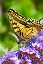 Little purple flowers, butterfly