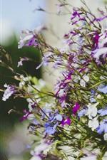 iPhone fondos de pantalla Muchas flores, púrpura, blanco, azul