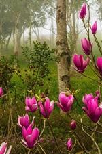 iPhone壁紙のプレビュー マグノリア、ピンクの花、森、春
