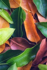 Many leaves, green, yellow, red, texture background