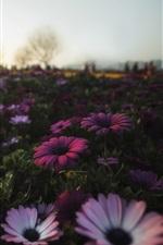 Morning, flowers, sunshine
