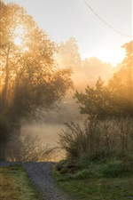 Preview iPhone wallpaper Morning, trees, fog, sun rays, road