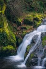 Moss, stream, waterfall