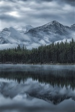 Mountains, forest, trees, fog, river, morning