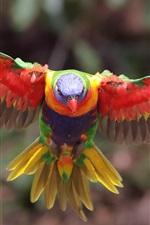 Preview iPhone wallpaper Multicolor lorikeet, flight, wings