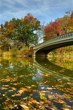 Preview iPhone wallpaper New York, Central Park, bridge, lake, trees, autumn