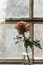 Preview iPhone wallpaper One rose, bottle, curtains, window